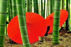 Rote Bangasa japanische Regenschirme in einem Bambuswald.