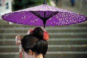 honshiki-nodategasa japanische Regenschirme getragen von einer frau mit dunkelen haaren. Der Regenschirm ist lila und hat einen schwarzen stiel. auf dem Lilanen hintergrund sind weiße kirschblüten angebracht.